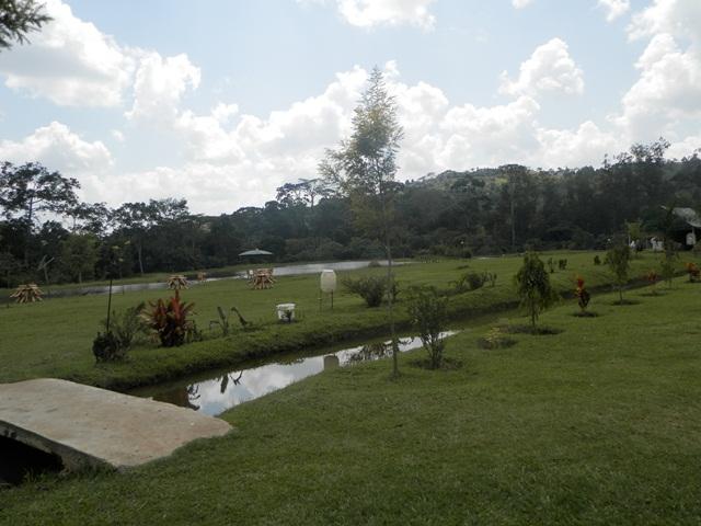 Kasenge Forest