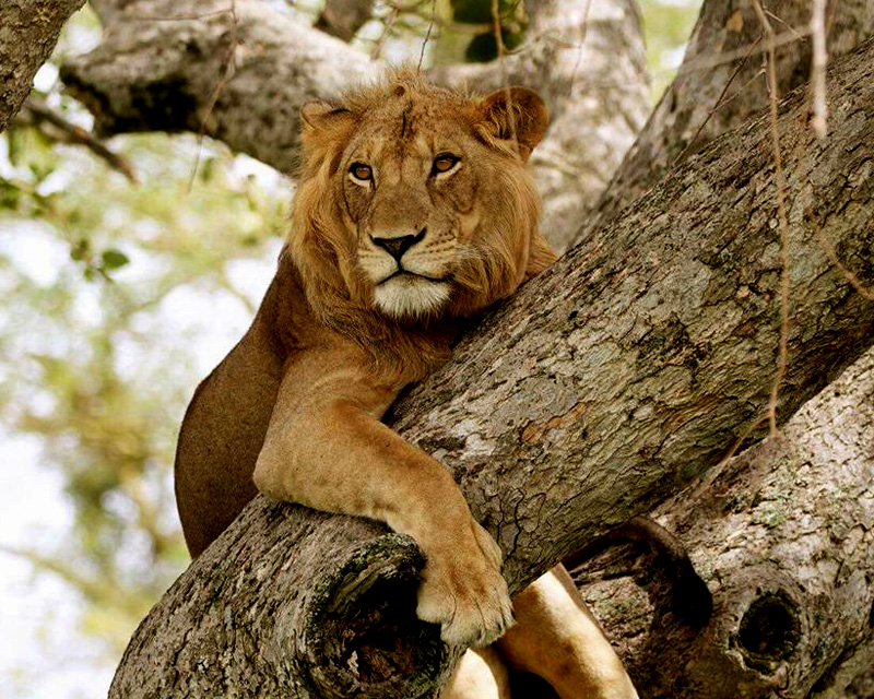 3 Days Queen Elizabeth national park safari with a boat ride along the Kazinga channel - budget wildlife tour