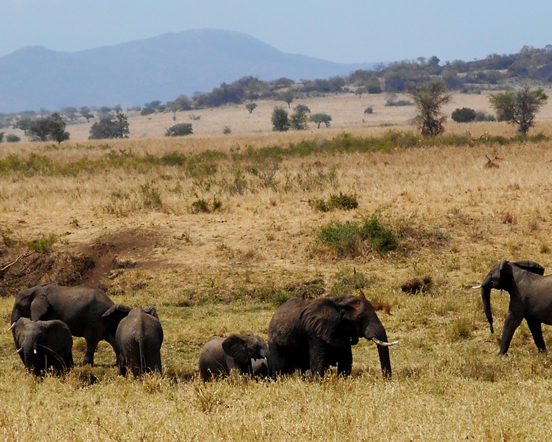 4 Days Kidepo Valley flying safari for game viewing and spectacular views of the changing landscapes and sceneries
